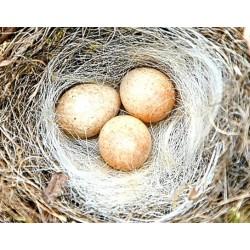 Nesting + Accessories
