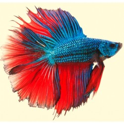 Betta Products and Food